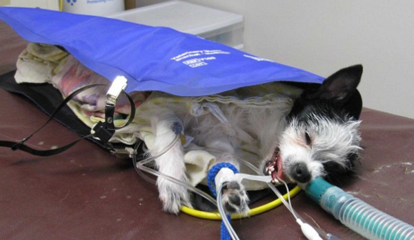 Is your dog safe under anesthesia?