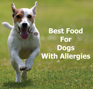 Best foods for dogs with allergies, available from www.carolesdoggieworld.com