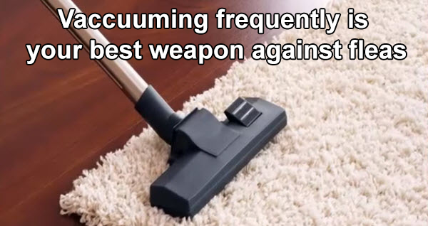 Frequent vacuuming is your secret weapon for getting rid of fleas in your home