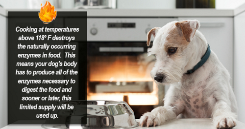 Cooking food destroys live enzymes and can cause enzyme deficiency in your dog