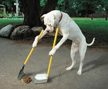 Pick up your own dog poop.