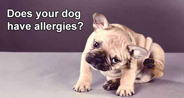 allergy free dog products from www.carolesdoggieworld.com