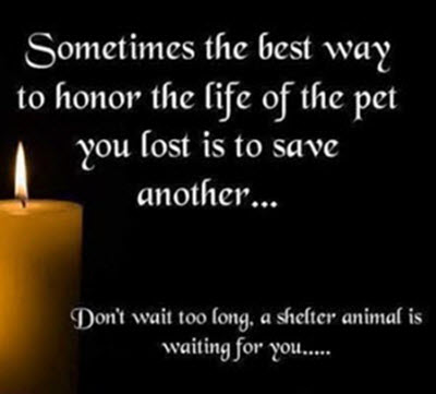 Pet Loss Grieving