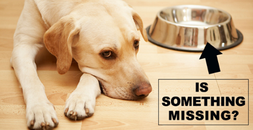 The food you feed your dog can be the difference between him or her surviving or thriving
