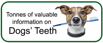 Valuable information about dog teeth