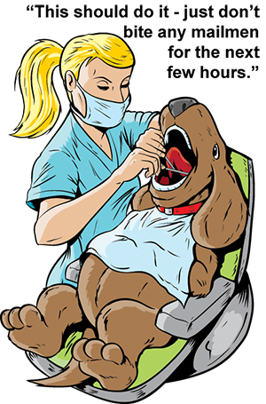 Everything you need to know about general anesthesia for dental procedures in dogs.